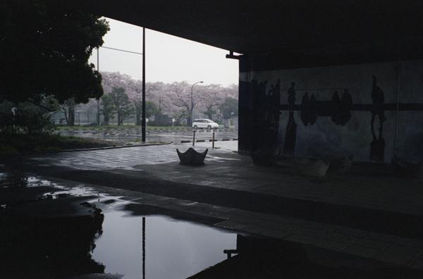 SAKURAKOMAZAWA02.jpg