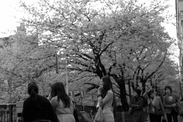 nakamegurosakura.jpg