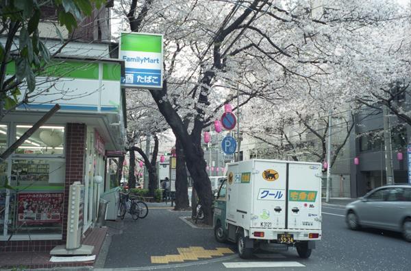 nakanosakura.jpg
