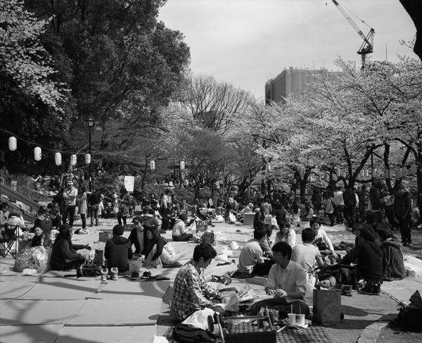 sakurawaseda.jpg